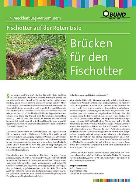 Titelbild Portrat Fischotter Foto V Dienemann Fischotter Otter Bedrohte Tiere