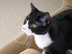 Adopt Kendra On Cats Cuddling Short Hair Cats