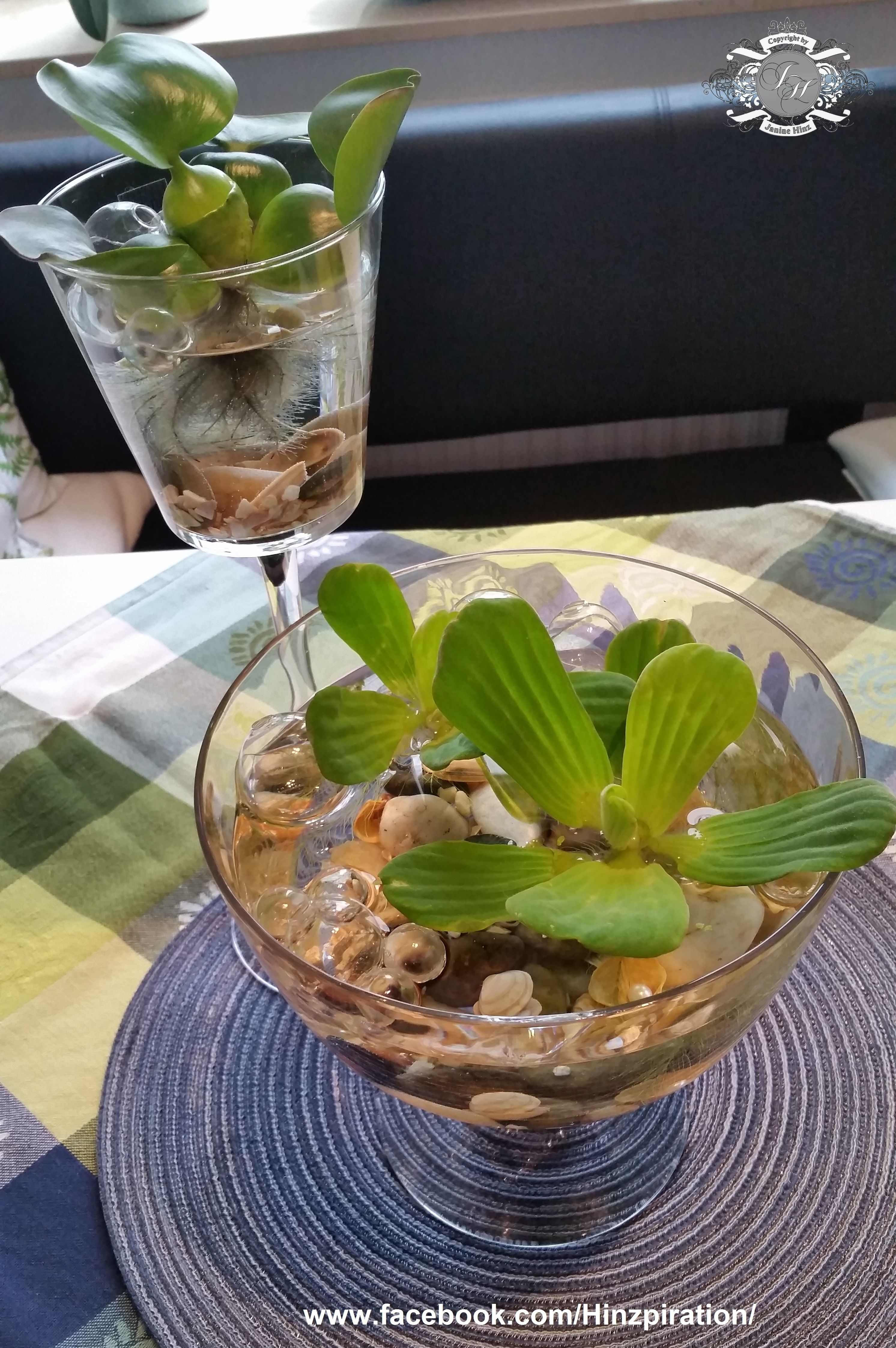 tischdeko schwimmpflanzen mit glaskugeln muscheln und steinen in einer glasschale bzw im. Black Bedroom Furniture Sets. Home Design Ideas