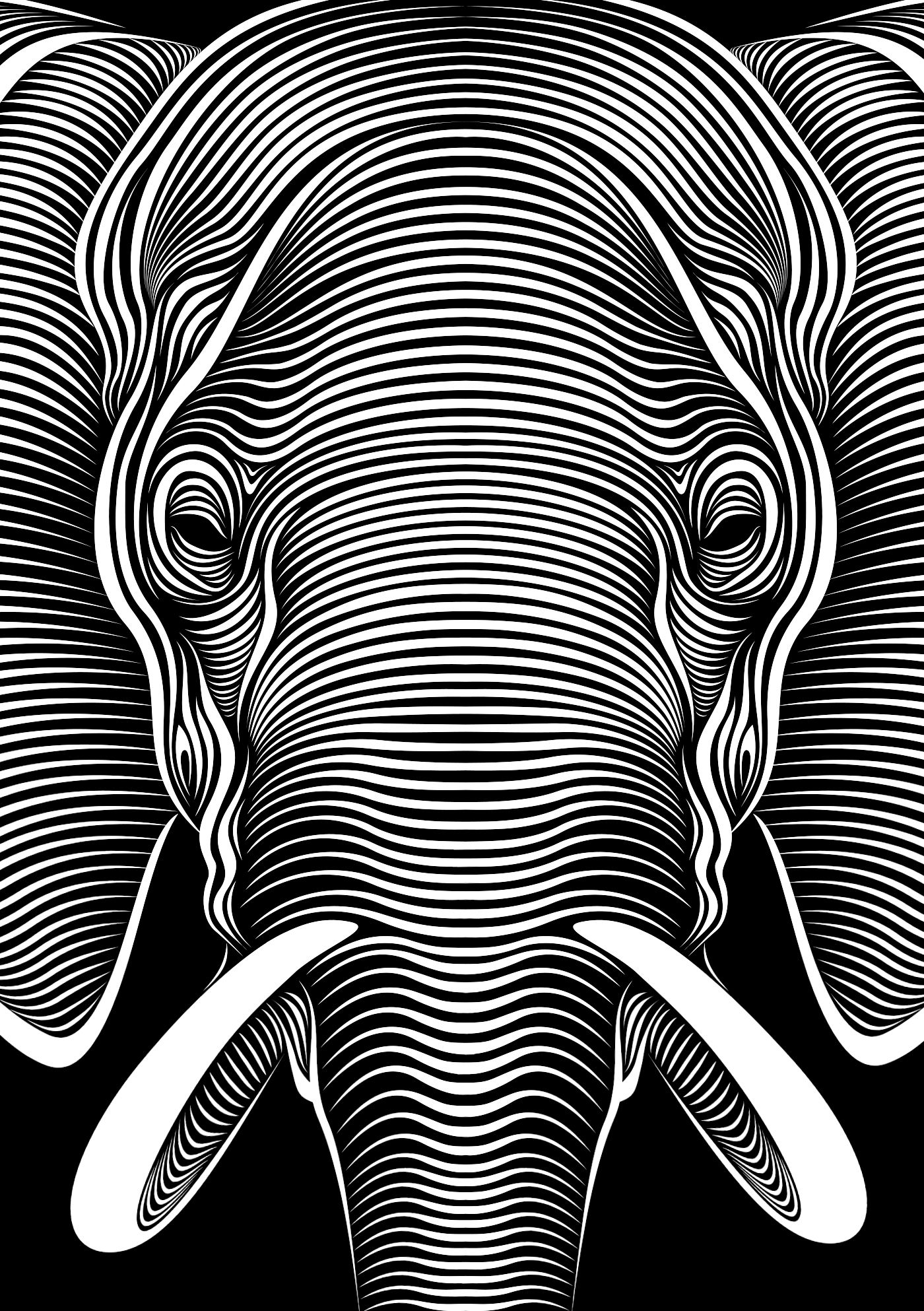 Contour Line Drawing Elephant : Elephant faces lll by patrick seymour on behance adult