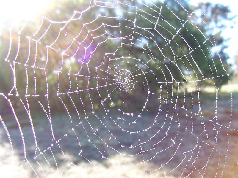 """""""On foggy mornings, Charlotte's web was truly a thing of beauty. This morning each thin strand was decorated with dozens of tiny beads of water. The web glistened in the light and made a pattern of loveliness and mystery, like a delicate veil."""" - Charlotte """"Charlotte's Web"""" #litduds"""