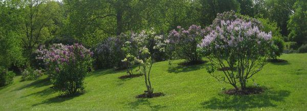 546c947a96528f92a43cdeb2a94e1e59 - Royal Botanical Gardens Hamilton Ontario Canada