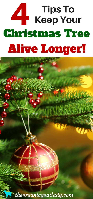 How To Keep A Christmas Tree Alive   Pinterest   Beautiful christmas ...
