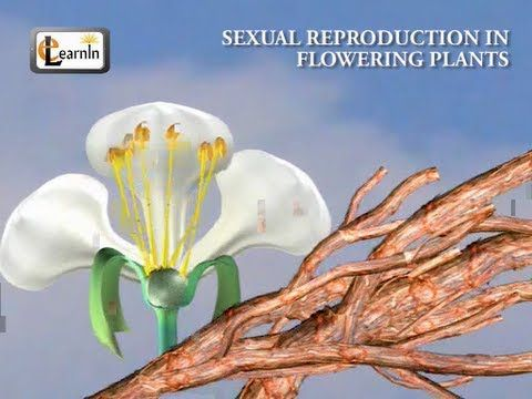 Sexual reproduction in plants pollination worksheet