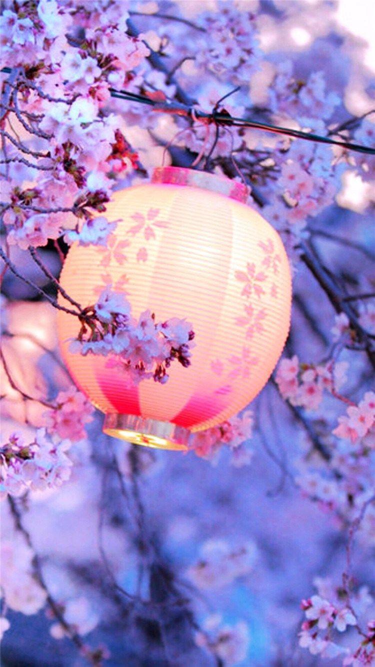 Night Lantern Flower Trees Iphone 8 Wallpapers Japanese Lanterns Hanami Blossom