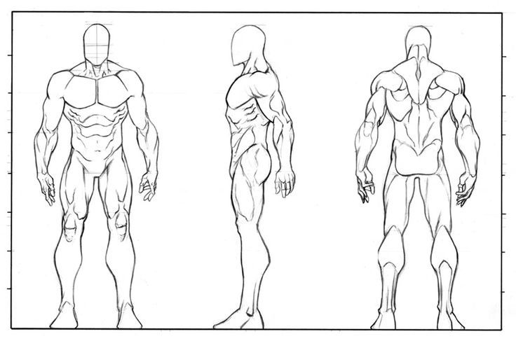 character design sheet template google search anatomyz in 2018