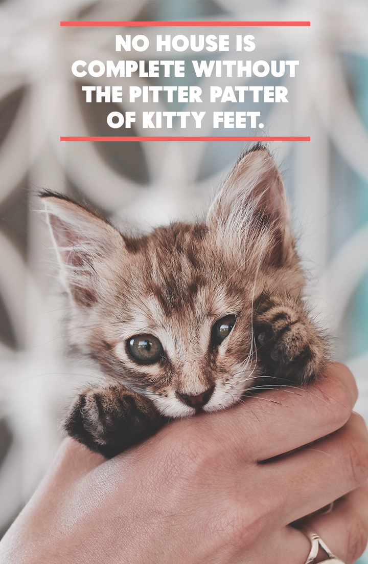 No House Is Complete Without The Pitter Patter Of Kitty Feet Cat Biting Cats Cat Facts