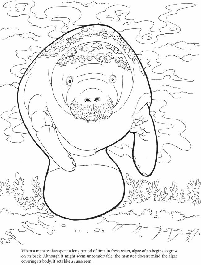 manatee with algae | Stencil | Pinterest | Colores, Mandalas and ...