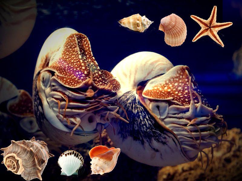 Superbe support sur Les Mollusques: Mollusque Exemple ...