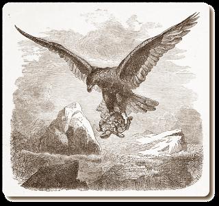 Fabel von Aesop auf Aventin Blog: Der Adler und die Schildkröte - Torheit