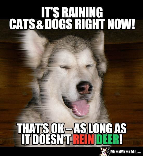 Dog Joke It S Raining Cats Dogs Right Now That S Ok As Long
