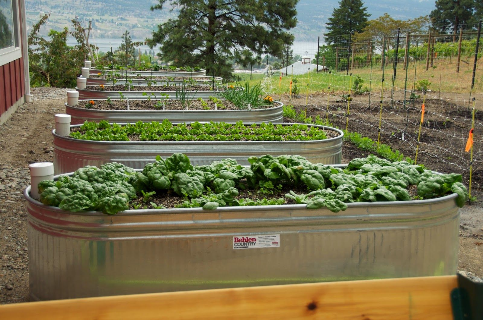Image result for stock tank raised bed s garden troughs