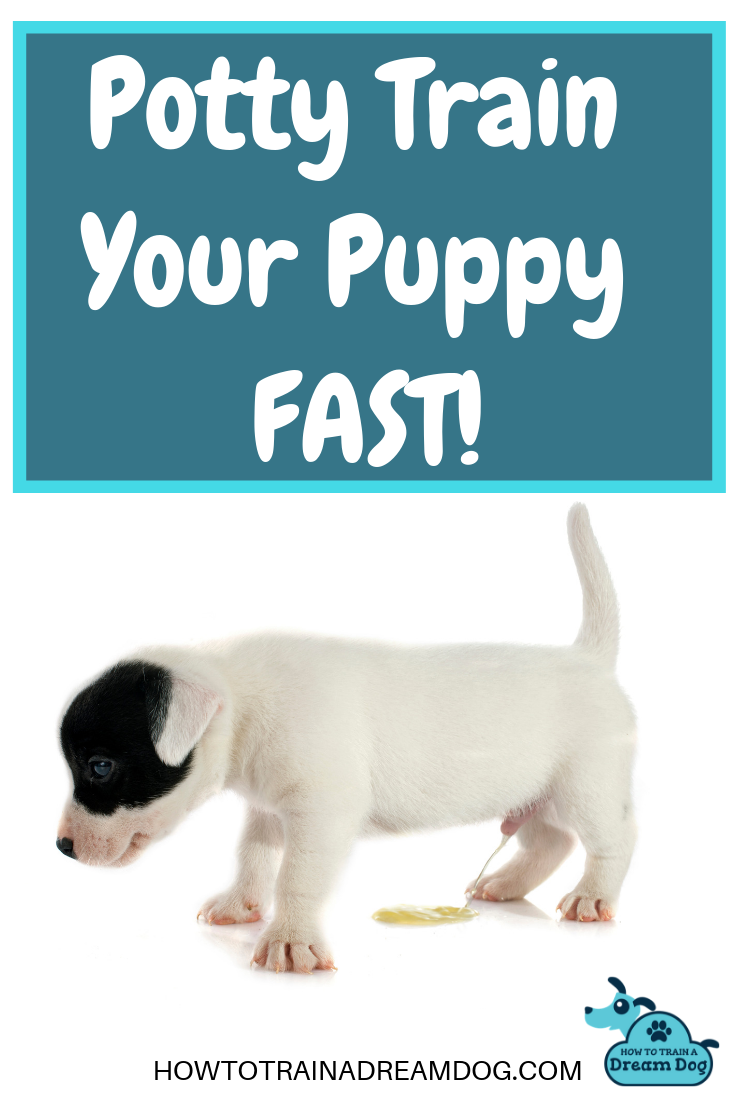 Quick Tips To Potty Train Your Puppy Fast How To Train A Dream Dog Training Your Puppy Training Your Dog Puppy Training