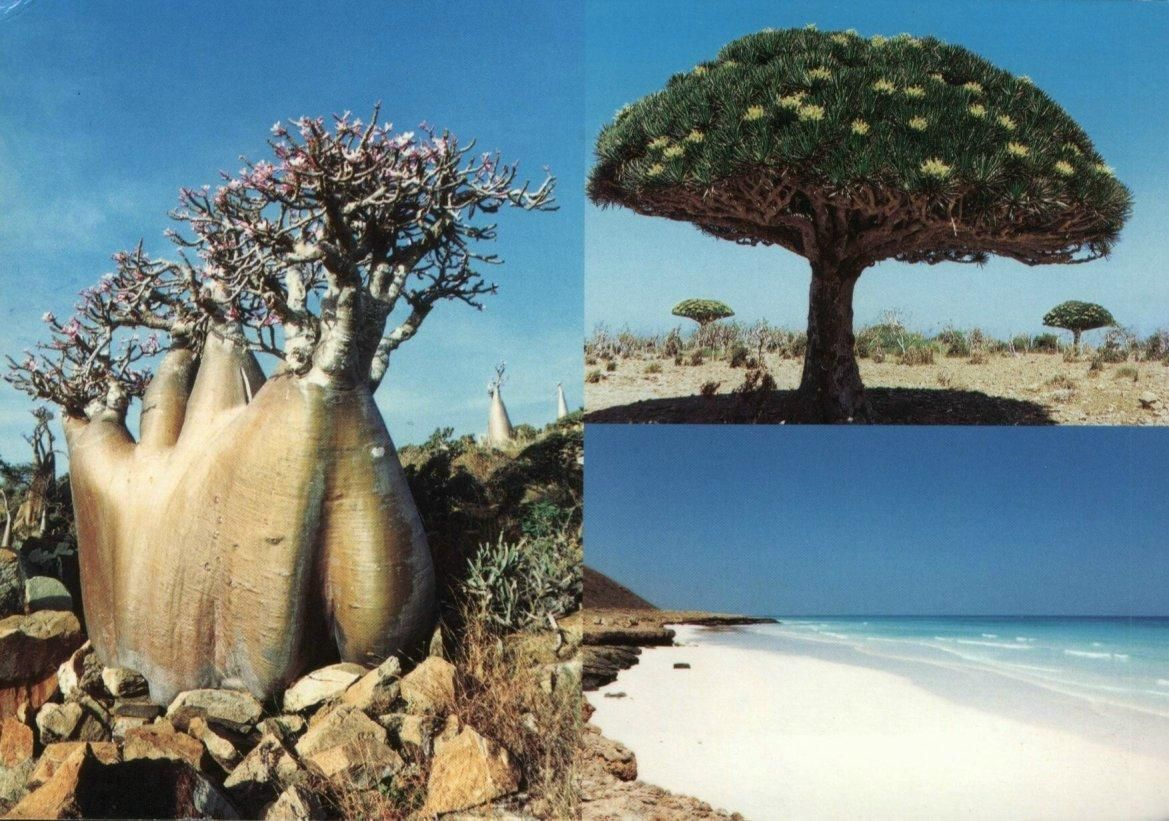 Socotra Is The Garden Of Eden On Earth Mysterious Places On Earth