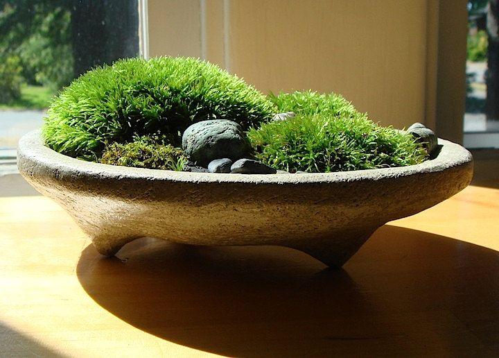 zen concrete handmade mini moss bowl planter home decor. Black Bedroom Furniture Sets. Home Design Ideas