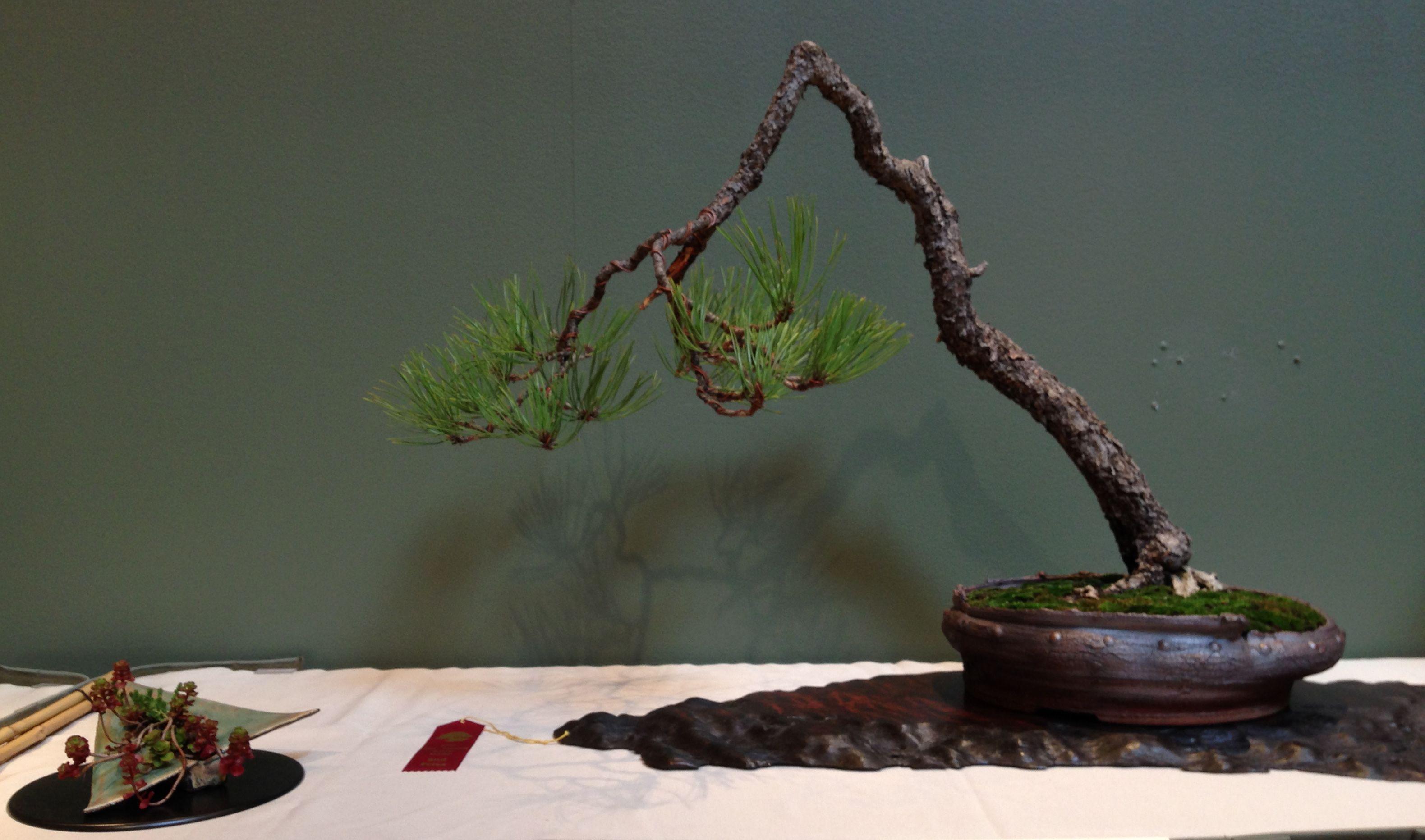 Pin On 2015 Mid America Bonsai Exhibit