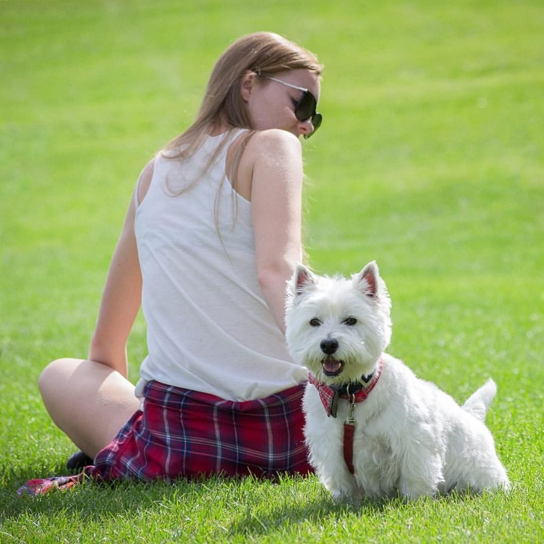 Waybackwednesday To The Winnipeg Westie Walk With My Human