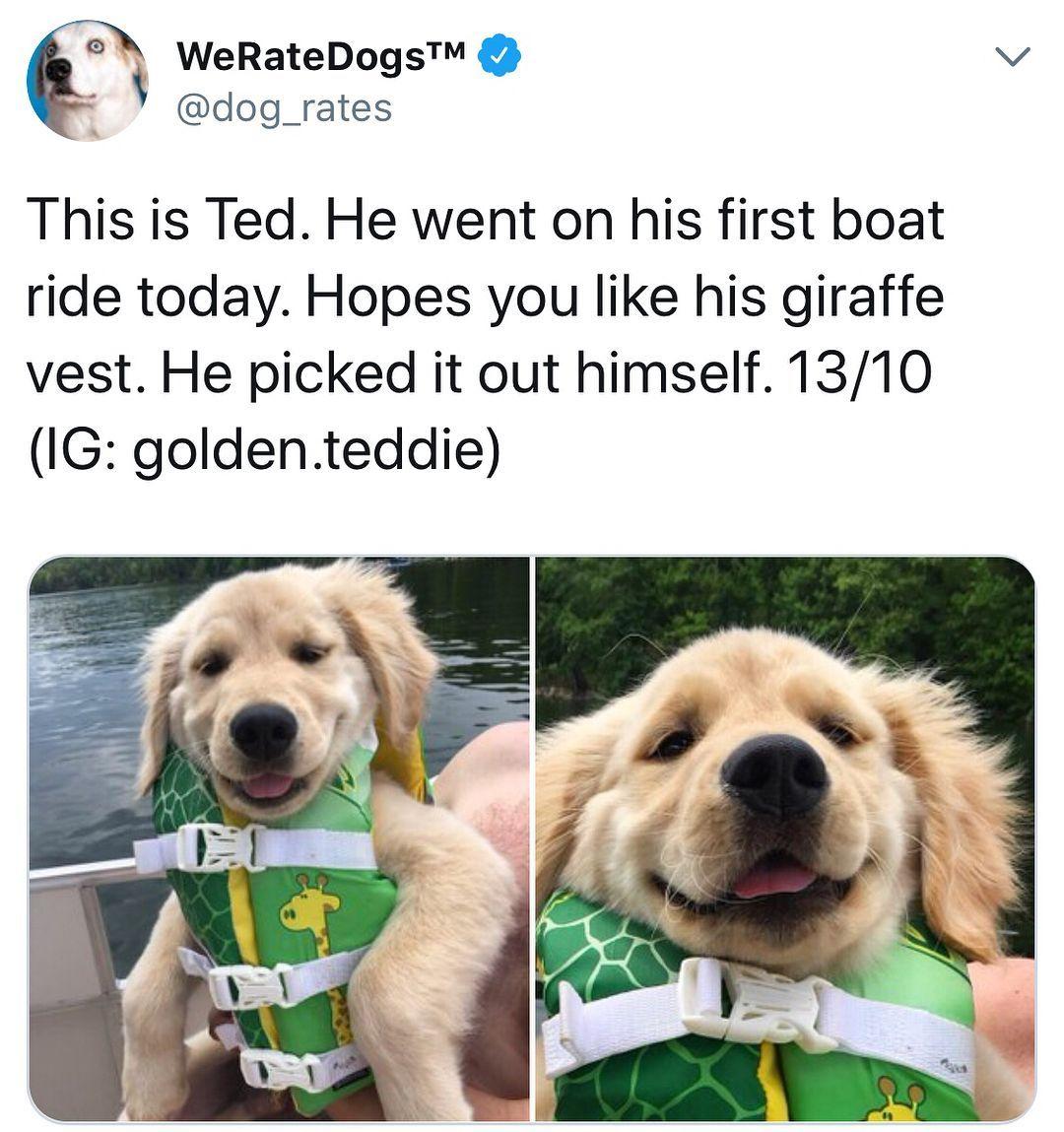 Dog Memes For The Win Dog Doggo Doggy Dogmeme Dogmemes Moredogs Dogs Funny Fun Humor Hi Cute Animals Cute Baby Animals Cute Little Animals