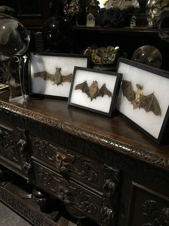 Collection Of 3 Vintage Bat Specimens At Gothic Rose Antiques