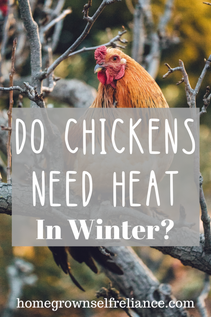 Caring for Backyard Chickens in the Winter | Chickens ...