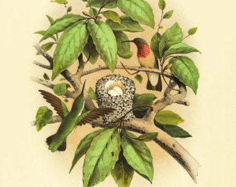 Bird of paradise art Bird art Print Nature art by AntiqueWallArt