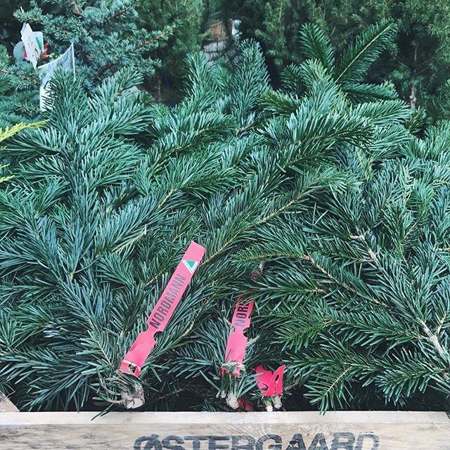 Jeg smilte ekstra ved synet af denne kasse med mit efternavn på og gran i ... Jeg var nemlig juletræssælger i en alder af 11 år. Med egen virksomhed og fin omsætning 🙈 I vores baghave havde vi en lille skov med økologiske juletræer, hvor folk selv udvalgte og fældede. Betaling var med kontanter og direkte i min sparegris - min far stod for regnskabet🎄 Savner lidt den julemagi fra mit barndomshjem, hvor min far slagtede gåsen lille juleaften, min mor hængte juleklip i loftet hele huset…