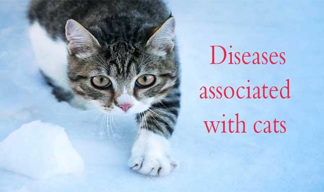 Pin On Cat Health