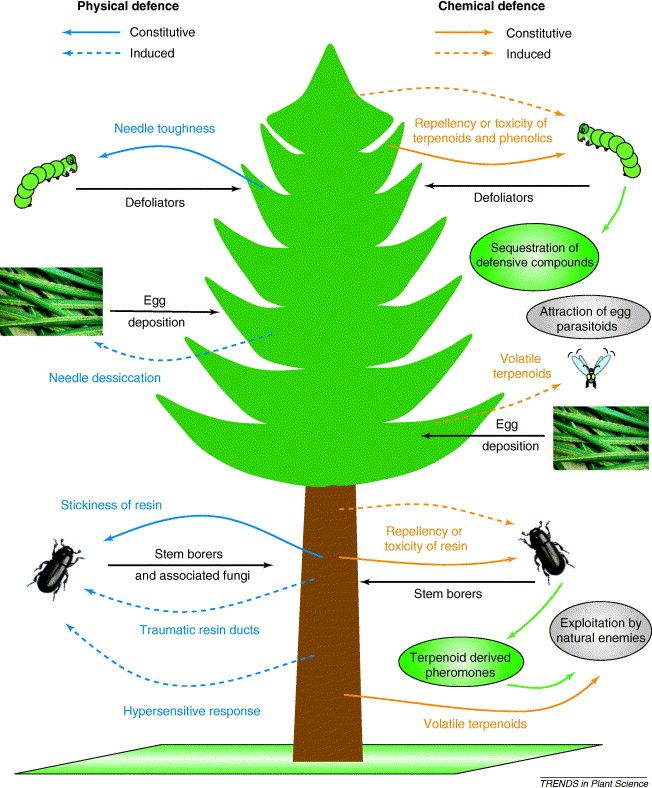 Example Of Some Physical And Chemical Plant Responses And Defence Mechanisms To Insects Chemical Plant Chemical Defence