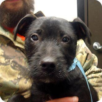 Dd 12 Lab Aire Puppy Retriever Mix Labrador Retriever Mix Catahoula Leopard Dog Mix