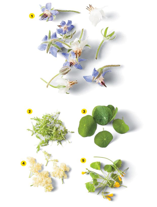 The Trendy Food Garnish Is Flowers and Micro Greens V E