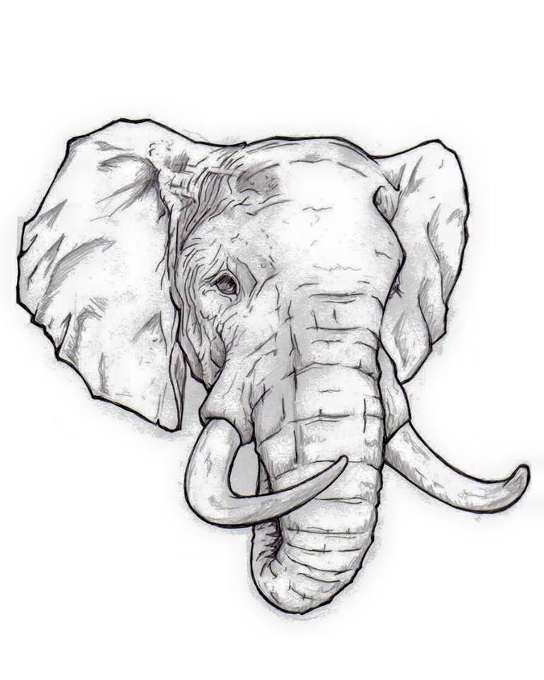Realistic Elephant Face Drawing : realistic, elephant, drawing, Aaron, Thompson, Tattoos, Elephant, Drawing,