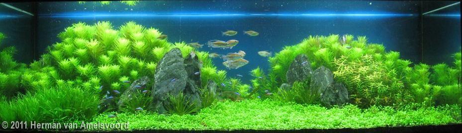 2011 Aga Aquascaping Contest Entry 29 Aquascape Planted Aquarium Freshwater Aquarium