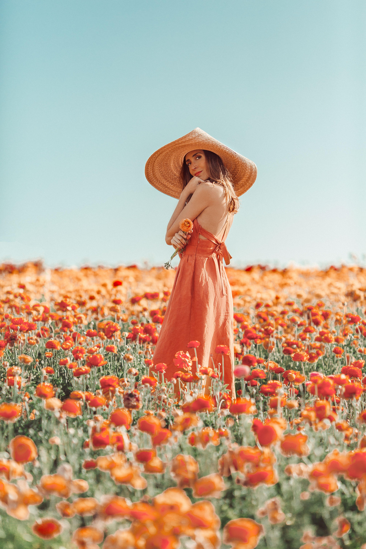Photo of Dreamy peach Flower fields