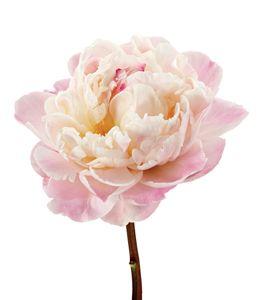 Peony Blush Gardenia Wedding Florist Wedding Flowers Luxury