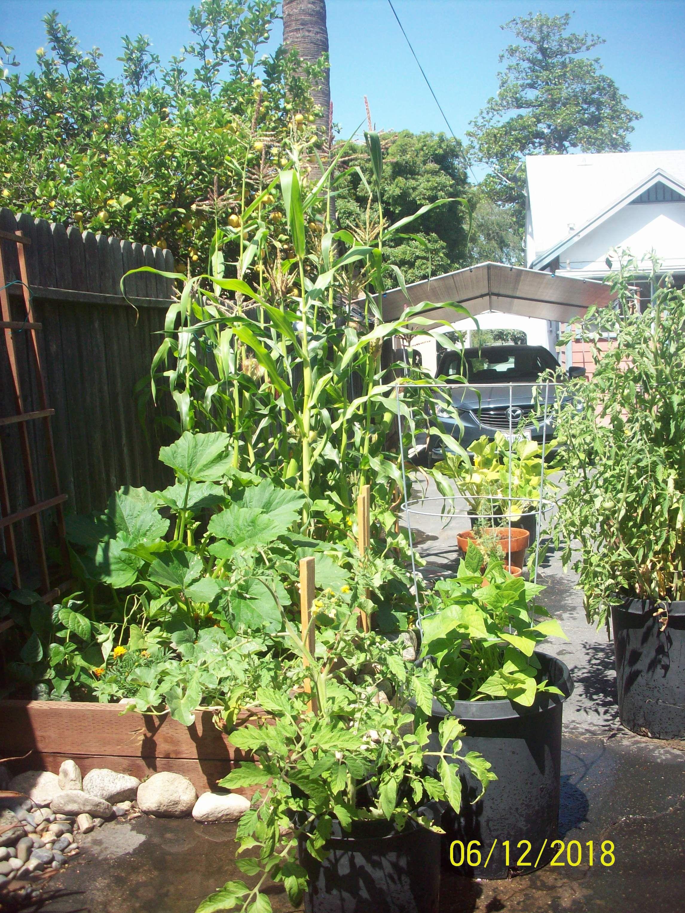 vertical hydroponic garden diy