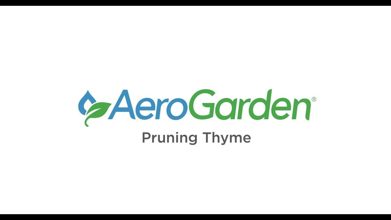 Pruning Thyme In 2019 Home Decor Decor Home 400 x 300