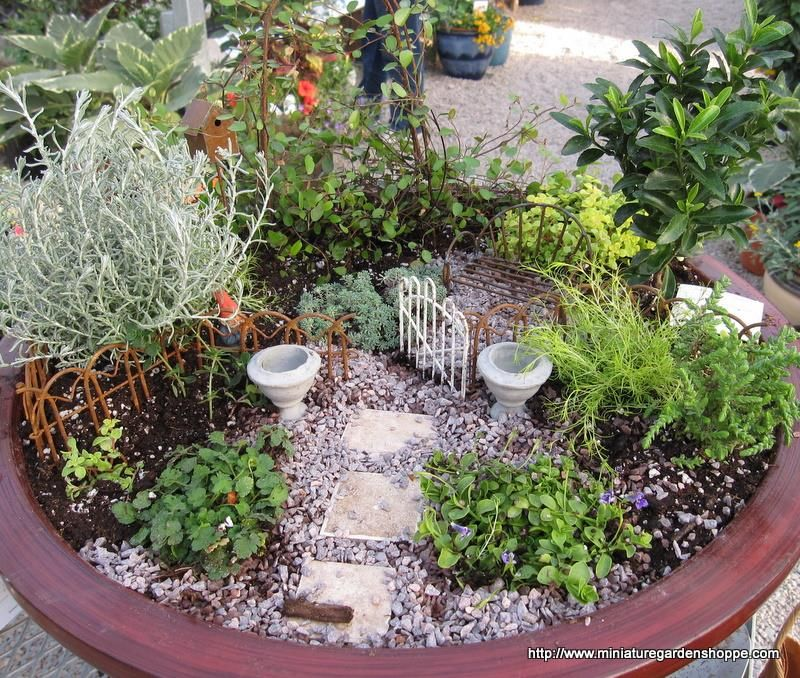 just found out we're going to be selling container gardens at Glen Ivy.  These little mini gardens are so cute!