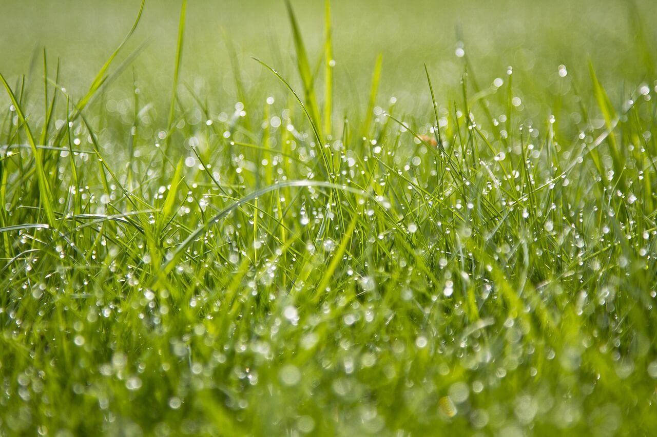 How To Do A Perfect Zero Turn Mowing On Wet Grass With Images
