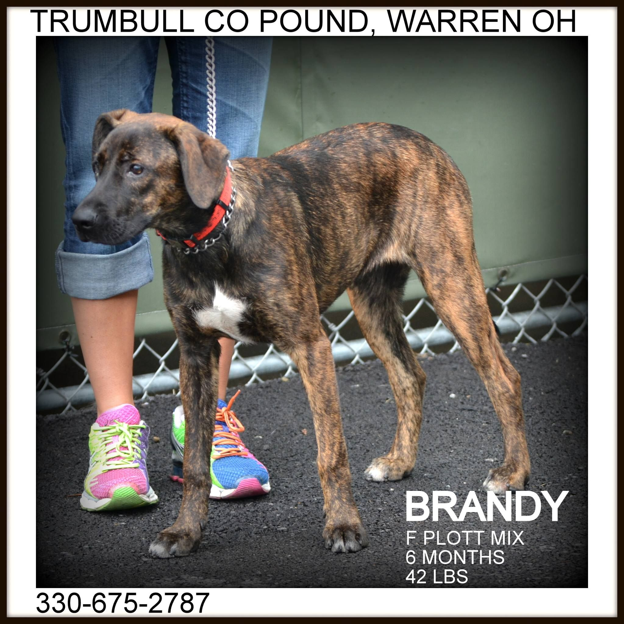 Urgent Please Help Brandy Trumbull County Dog Kennel Warren Ohio Https Www Facebook Com Pages Trumbull County Trumbull County Dog Help Love Your Pet