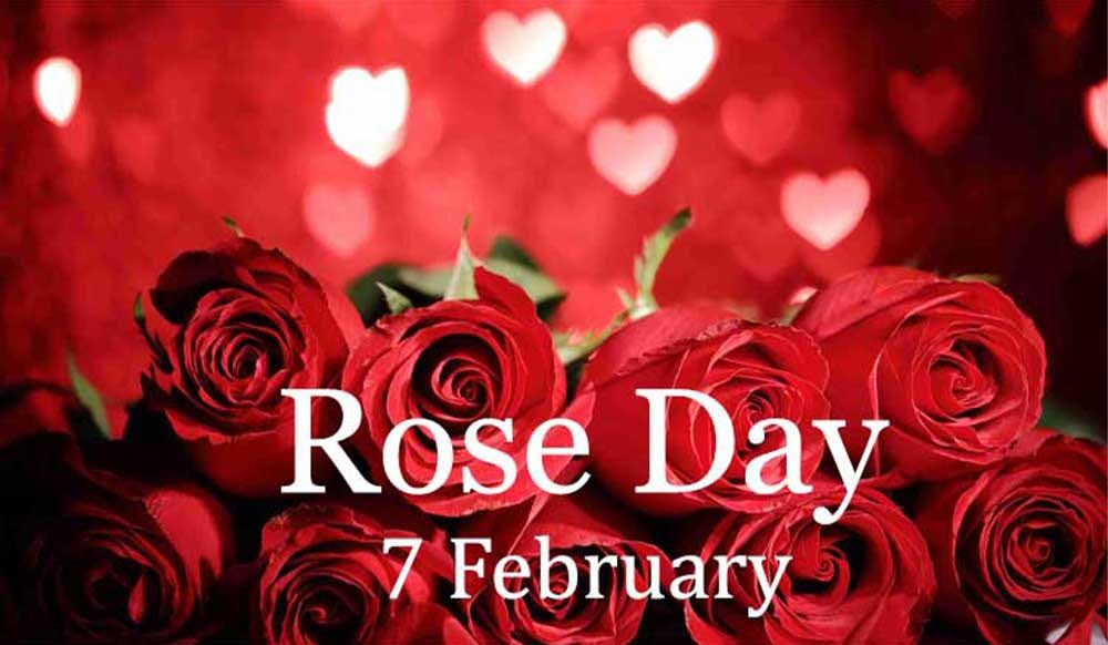 Happy Rose Day Quotes Status Love Wishes Messages In 2020 Valentine Day Week Rose Day Shayari Valentines Day Wishes