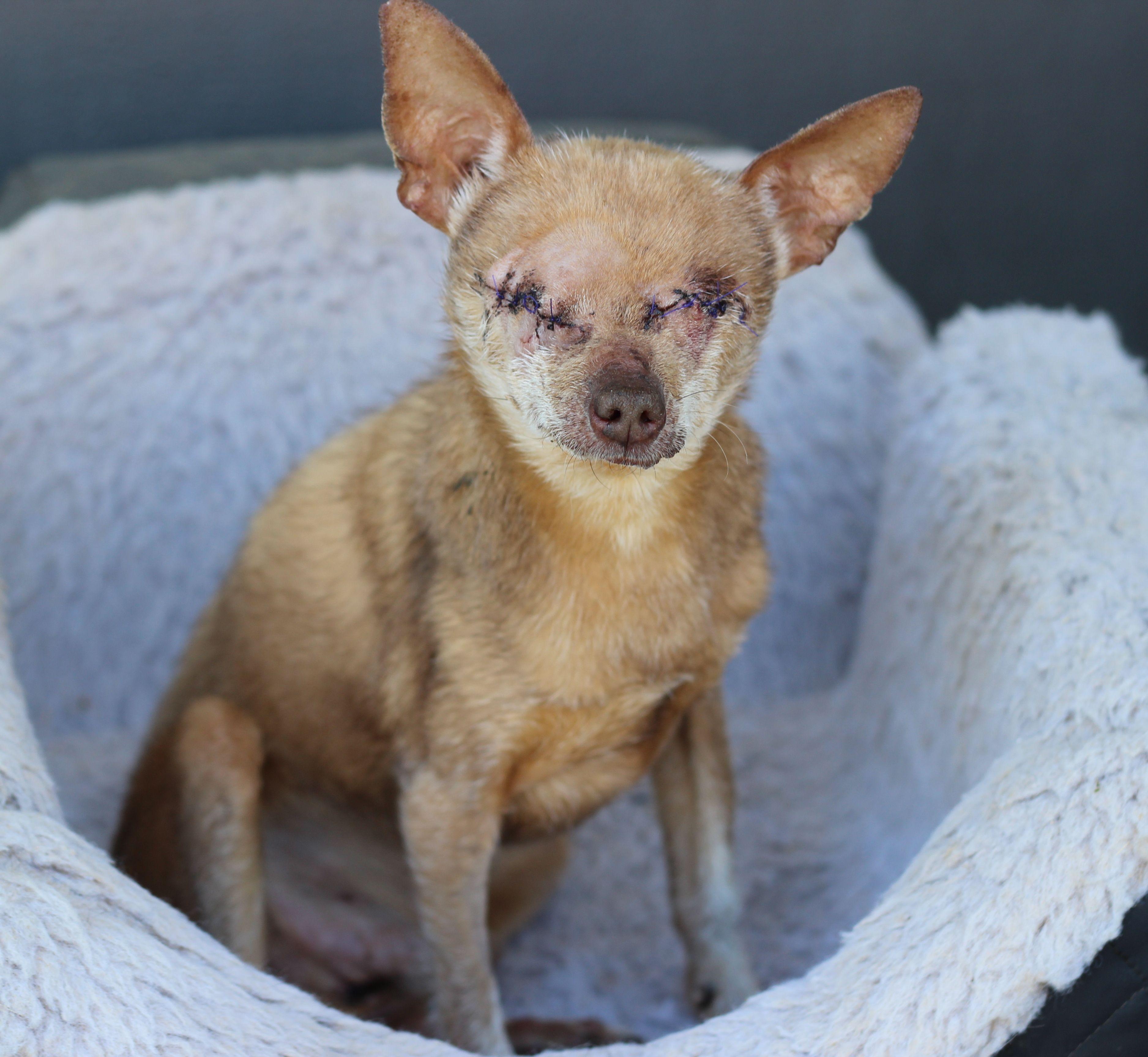 Adopt Tas on Dog adoption, Pet adoption, Animals