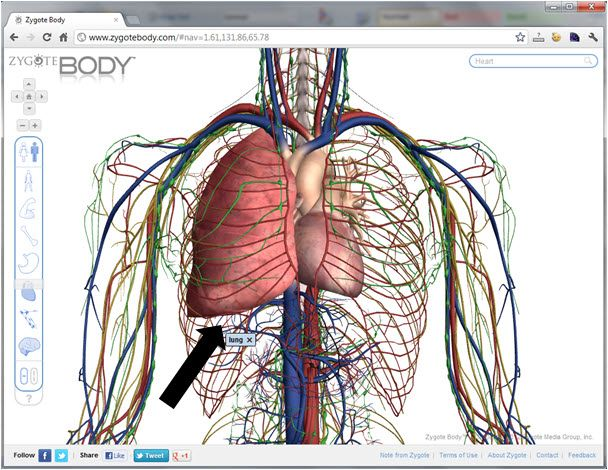 Zygote Body is an excellent download allowing the user to explore