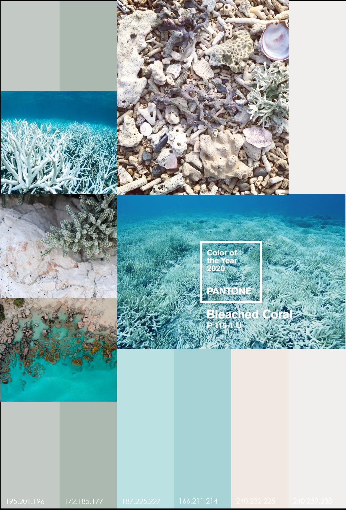 GZ STUDIO {Bleached Coral} Volgens ontwerpstudio Jack&Huei vergeet Pantone met d...