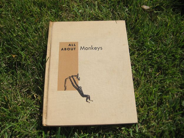 Pictures and Pages All about Monkeys