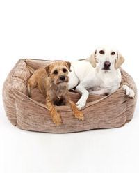 Perfect Pet Gift, Throne Dog Bed