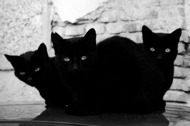 Tri-Cat