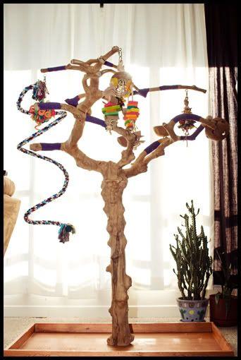 Java tree diy bird toys pinterest perroquets jouets for Oiseau domestique interieur