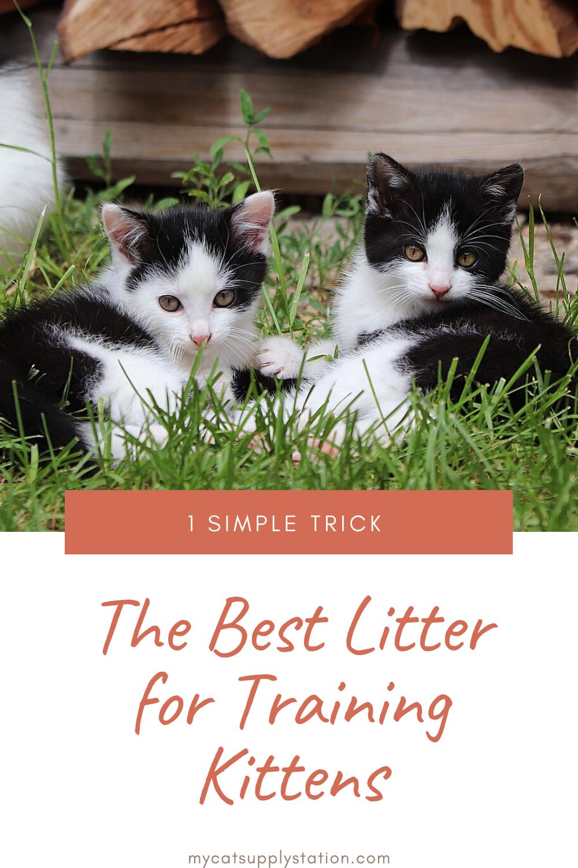 Kittens Need Special Litter In 2020 Kitten Kittens Litter