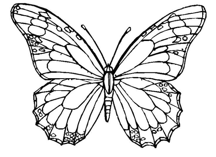 Monarch Butterfly Coloring Template Display