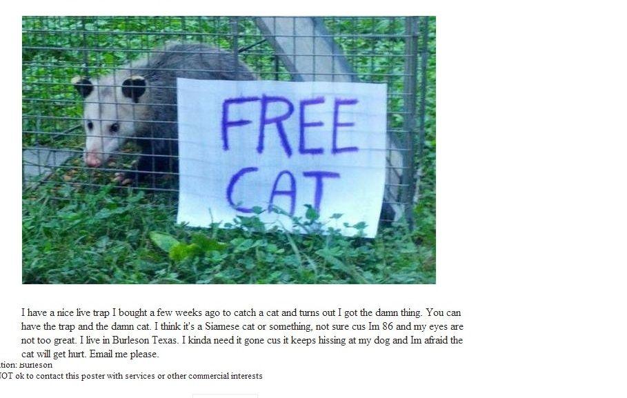 It S Not A Cat Funny Possum Craigslist Free Cats Funny